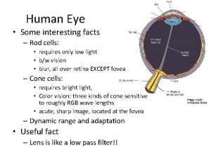 Human Eye Some interesting facts Rod cells requires