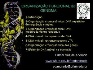 ORGANIZAO FUNCIONAL do GENOMA 1 Introduo 2 Organizao
