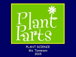 PLANT SCIENCE Ms Tenneson 2015 Major Plant Organs