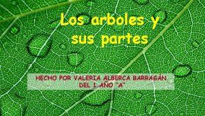 Los arboles y sus partes HECHO POR VALERIA