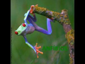 http i telegraph co ukmultimediaarchive01891coolfrog1891806 i jpg ANFBIOS