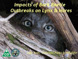 Impacts of Bark Beetle Outbreaks on Lynx Hares