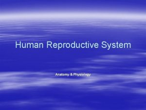Human Reproductive System Anatomy Physiology Function of the