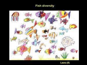 Fish diversity Laura 6 Species richness in vertebrates