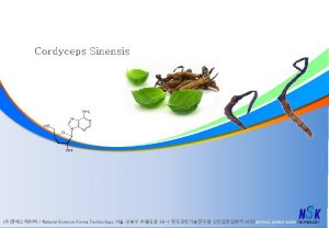 Cordyceps Sinensis Natural Science Korea Technology 39 1