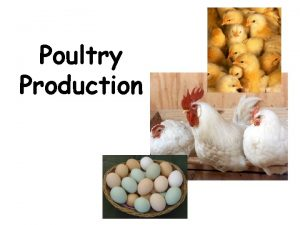 Poultry Production Poultry Production Objectives A Define common