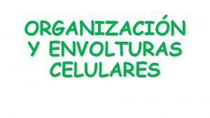 ORGANIZACIN Y ENVOLTURAS CELULARES PRIMERAS OBSERVACIONES Utiliz por