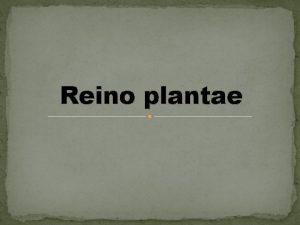 Reino plantae Se denomina plantas a los seres