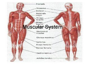 Muscular System Types of Muscle Tissue 40 of