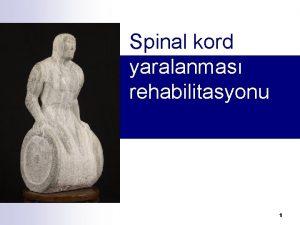Spinal kord yaralanmas rehabilitasyonu 1 Ksa anatomik bilgi