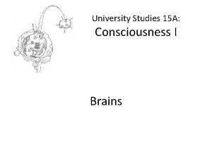 University Studies 15 A Consciousness I Brains Brains