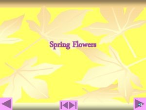 Spring Flowers Chapter 1 Spring Flowers that Grow