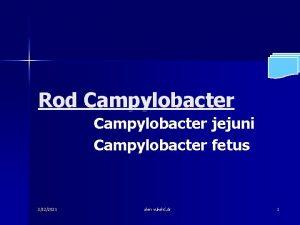 Rod Campylobacter jejuni Campylobacter fetus 3122021 alen vukeli