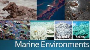 Marine Environments Availability of Nutrients Availability of Sunlight