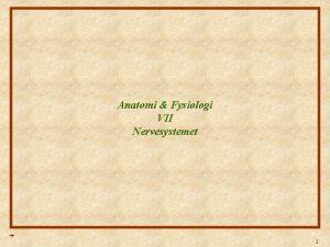 Anatomi Fysiologi VII Nervesystemet 1 Anatomi Fysiologi Lektion