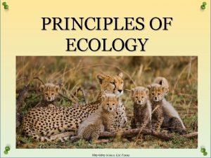 PRINCIPLES OF ECOLOGY NUTRITION AND ENERGY Ecology Study