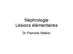 Nphrologie Lsions lmentaires Dr Francine Walker Structure histologique