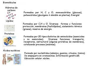 Biomolculas Hidratos de carbono Lpidos Protenas cidos nuclicos