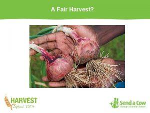 A Fair Harvest A Fair Harvest There is