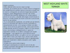 Origine scozzese Erano utilizzati nella caccia a volpi