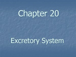 Chapter 20 Excretory System Excretory System Structure Function