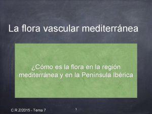 La flora vascular mediterrnea Cmo es la flora