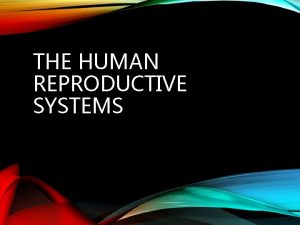 THE HUMAN REPRODUCTIVE SYSTEMS THE MALE REPRODUCTIVE SYSTEM