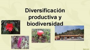 Diversificacin productiva y biodiversidad IMPORTANCIA ECOLOGICA REGION SIERRA