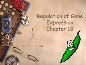 Regulation of Gene Expression Chapter 18 Gene expression