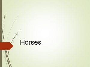 Horses Light Horses Appaloosa Origin Descendents of Spanish