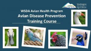 WSDA Avian Health Program Avian Disease Prevention Training