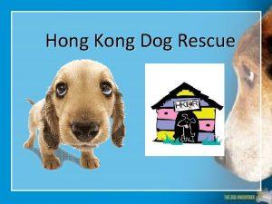 Hong Kong Dog Rescue HKDR Hong Kong Dog