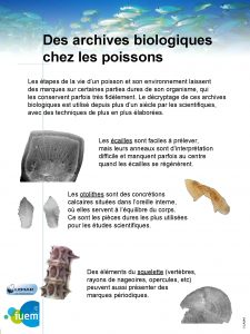 Des archives biologiques chez les poissons Les tapes