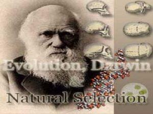Charles Darwin 1809 1882 Sailed around the world