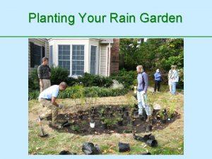 Planting Your Rain Garden The Rain Garden Environment