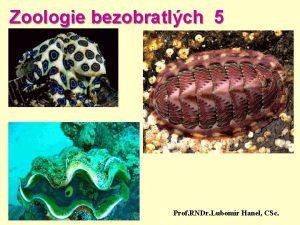 Zoologie bezobratlch 5 Prof RNDr Lubomr Hanel CSc