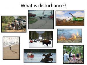 What is disturbance Disturbance effects Physiology Stress Energetics