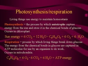Photosynthesisrespiration Living things use energy to maintain homeostasis
