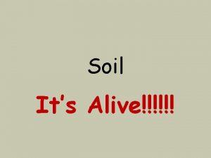 Soil Its Alive What is soil Soil is