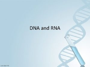 DNA and RNA Did you know If you