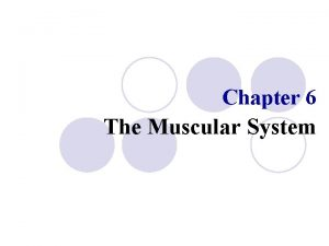 Chapter 6 The Muscular System The Muscular System