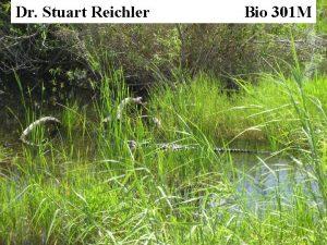 Dr Stuart Reichler Bio 301 M Bio 301