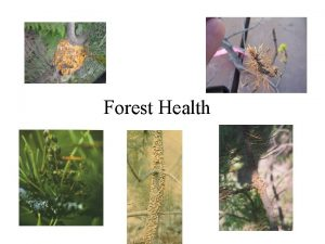 Forest Health Forest Health Update Importance of Silviculture