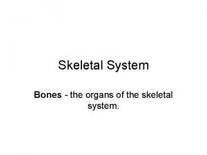 Skeletal System Bones the organs of the skeletal