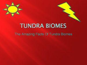TUNDRA BIOMES The Amazing Facts Of Tundra Biomes