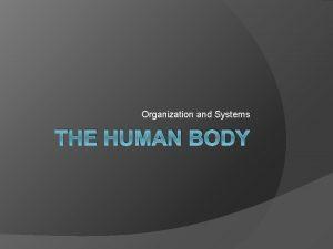 Organization and Systems THE HUMAN BODY Organization Organization