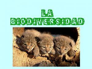 LA BIODIVERSIDAD Qu es la biodiversidad La Biodiversidad