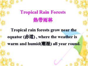 Tropical Rain Forests Tropical rain forests grow near