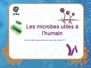 Les microbes utiles lhumain Les microbes peuvent donc