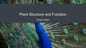 Plant Structure and Function Biology for Majors Plant